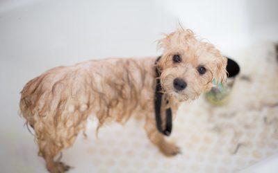 I prodotti per l'igiene del tuo cane o gatto