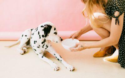 Inviaci i dati del tuo cane e noi calcoliamo il suo fabbisogno giornaliero in KCal